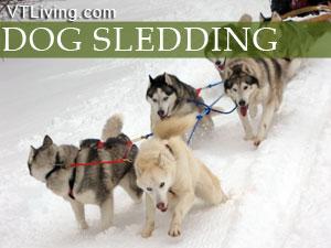 vt dog sledding