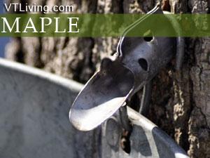 Vermont spring maple
