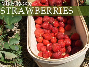 Vermont strawberry farms, pick your own vt strawberries