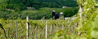Boyden Valley Winery, Cambrindge Vermont attraction, wine tours, wine tastings