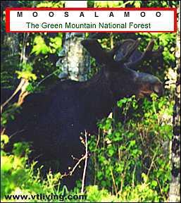 Moosalamoo Vermont Moose Abenaki Indian Tribe