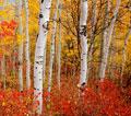 molly stark trail foliage