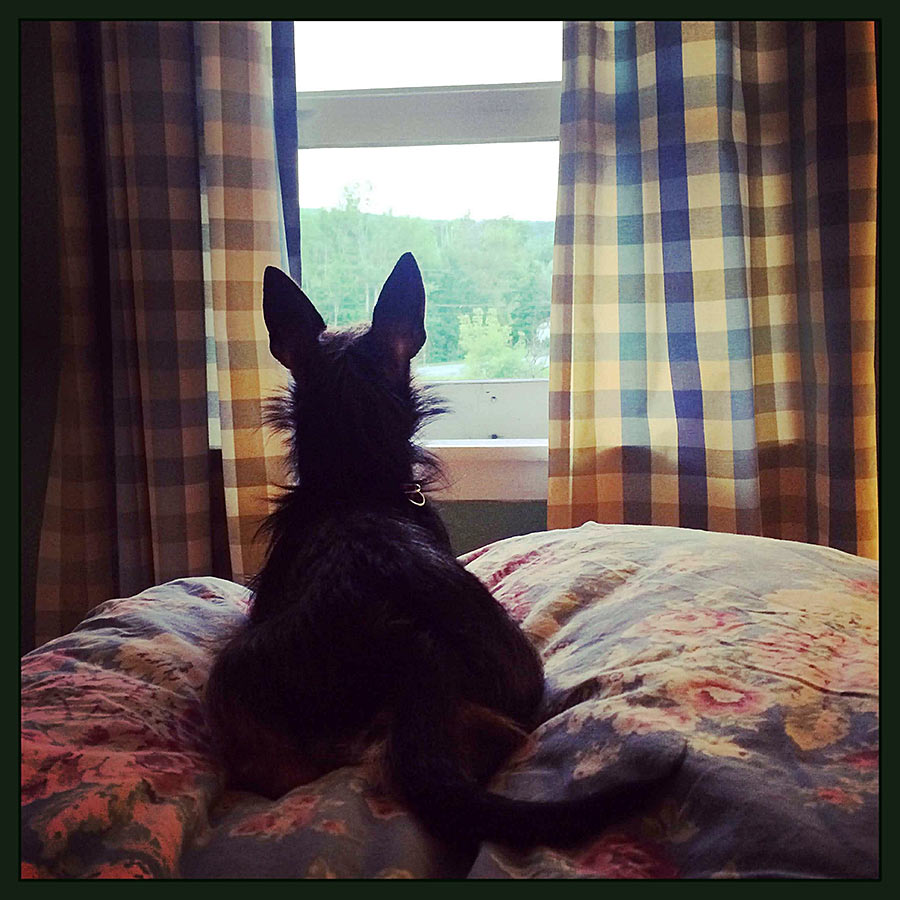 Best Hotels In Vermont To Bring Dogs