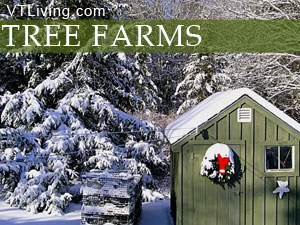 pick your own Christmas tree at Vermont's xmas tree farms