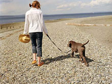 traveling with pets, Pet Friendly Travel