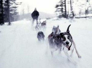 dog sledding mushers Vermont dog sled races