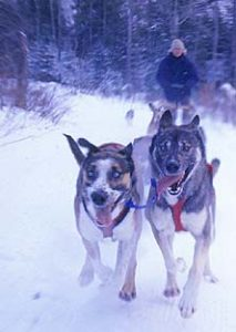Vermont Dog sledding vacations