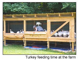 Free Range Turkeys, Fresh Turkey