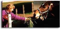horse_o