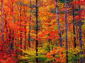 southern vermont foliage