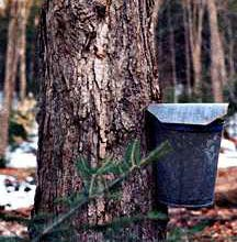 Vermont Maple Producers, Maple Sugaring Bucket
