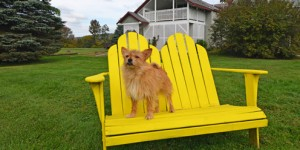 Dog Friendly Vermont Lodging at Paw House Inn Killington Rutland Okemo Vermont